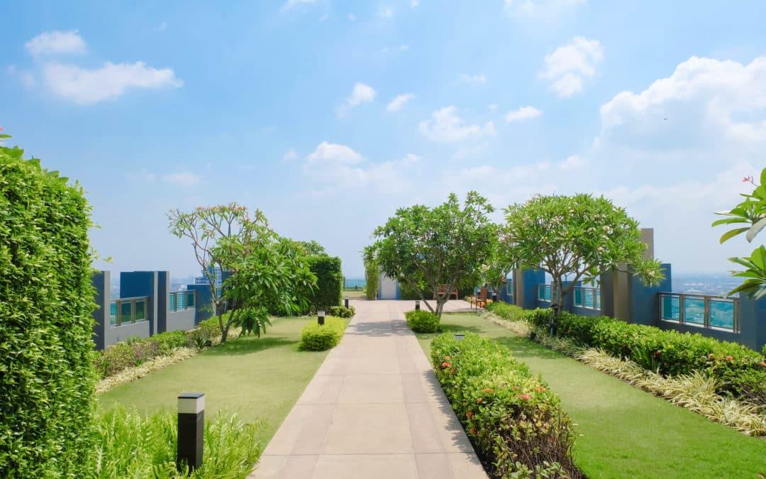 Toit végétalisé : le souffle vert des villes