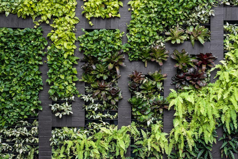 façade-végétalisée-mur